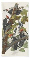 Pileated Woodpecker Beach Towel by John James Audubon