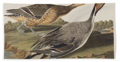 Pin-tailed Duck Beach Towel by John James Audubon