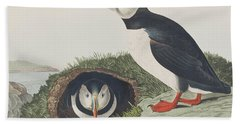 Puffin Beach Sheet by John James Audubon