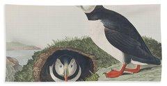 Puffin Beach Towel by John James Audubon