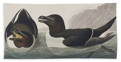 Razor Bill Beach Sheet by John James Audubon