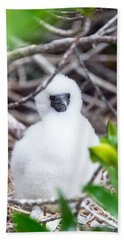 Red Footed Booby Chick Beach Sheet by Jess Kraft