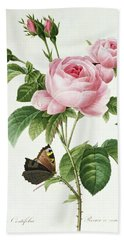 Rosa Centifolia Beach Towel by Pierre Joseph Redoute
