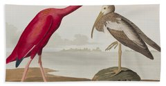 Scarlet Ibis Beach Towel by John James Audubon