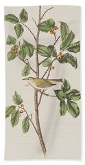 Tennessee Warbler Beach Sheet by John James Audubon