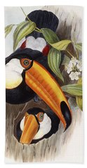 Toucan Beach Towel by John Gould
