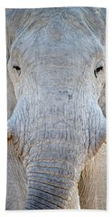 African Elephant Loxodonta Africana Beach Sheet by Panoramic Images