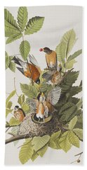 American Robin Beach Towel by John James Audubon