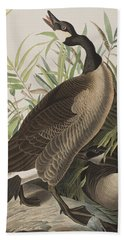 Canada Goose Beach Sheet by John James Audubon