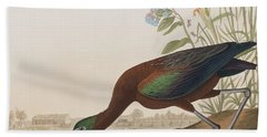 Glossy Ibis Beach Towel by John James Audubon