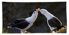 Black-browed Albatross Couple Beach Sheet by Jean-Louis Klein & Marie-Luce Hubert