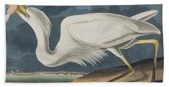 Great White Heron Beach Sheet by John James Audubon