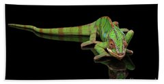 Sneaking Panther Chameleon, Reptile With Colorful Body On Black Mirror, Isolated Background Beach Towel by Sergey Taran