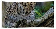 Amur Leopard Beach Towel by Martin Newman