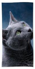 Russian Blue Cat Beach Sheet by Nailia Schwarz