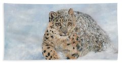 Snow Leopard Beach Sheet by David Stribbling