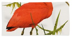 A Scarlet Ibis From South America Beach Towel by Kenneth Lilly