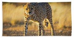 African Cheetah Beach Sheet by Inge Johnsson