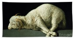 Agnus Dei Beach Sheet by Francisco de Zurbaran