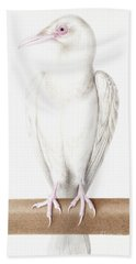 Albino Crow Beach Towel by Nicolas Robert