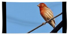 American Crossbill On Wire     Spring   Indiana   Beach Towel by Rory Cubel