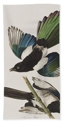 American Magpie Beach Towel by John James Audubon
