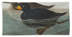 American Scoter Duck Beach Towel by John James Audubon
