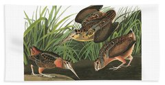 American Woodcock Beach Sheet by John Audubon