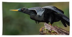 Anhinga Anhinga Anhinga, Costa Rica Beach Towel by Panoramic Images