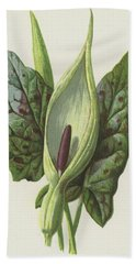 Arum, Cuckoo Pint Beach Towel by Frederick Edward Hulme