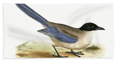 Azure Winged Magpie Beach Towel by English School