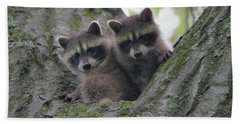 Baby Raccoons In A Tree Beach Towel by Dan Sproul