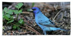 Beautiful Indigo Bunting Beach Sheet by Sabrina L Ryan