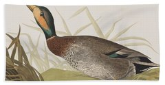Bemaculated Duck Beach Towel by John James Audubon