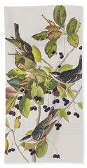 Black Poll Warbler Beach Sheet by John James Audubon