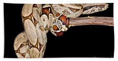 Boa Constrictor Beach Towel by Dant� Fenolio