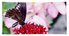 Black Butterfly On Red Flower Beach Sheet by Sandy Taylor