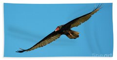 Buzzard Circling Beach Sheet by Mike Dawson
