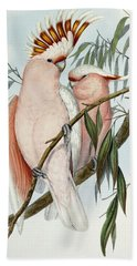 Cacatua Leadbeateri Beach Towel by John Gould
