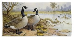 Canada Geese Beach Towel by Carl Donner
