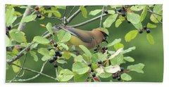 Cedar Waxwing Eating Berries Beach Sheet by Maili Page