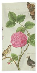 Centifolia Rose, Lavender, Tortoiseshell Butterfly, Goldfinch And Crested Pigeon Beach Sheet by Nicolas Robert