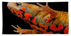 Chuxiong Fire Belly Newt Beach Sheet by Dant� Fenolio