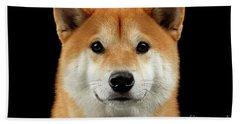 Close-up Portrait Of Head Shiba Inu Dog, Isolated Black Background Beach Sheet by Sergey Taran