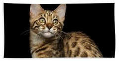 Closeup Bengal Kitty On Isolated Black Background Beach Sheet by Sergey Taran