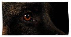 Closeup Eyes Of German Shepherd On Black Beach Towel by Sergey Taran
