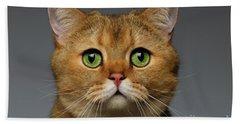 Closeup Golden British Cat With  Green Eyes On Gray Beach Sheet by Sergey Taran