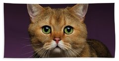 Closeup Golden British Cat With  Green Eyes On Purple  Beach Towel by Sergey Taran