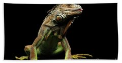 Closeup Green Iguana Isolated On Black Background Beach Towel by Sergey Taran