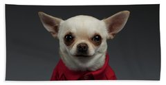 Closeup Portrait Chihuahua Dog In Stylish Clothes. Gray Background Beach Sheet by Sergey Taran